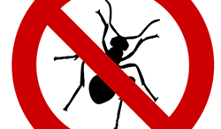 keep-bugs-pests-out-of-your-pool