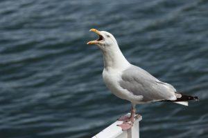 bird pool pest problem